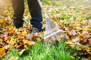 gardener_raking_leavs